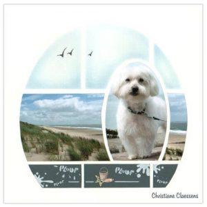 Dog layout